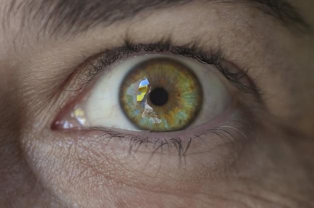 Brazylijska kobieta zielone oczy
