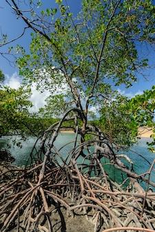 Brazylijska plaża i angrove na plaży barra de camaratuba w pobliżu joao pessoa paraiba brazylia