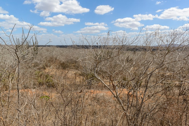Brazylijski biome caatinga monteiro paraiba brazylia 29 grudnia 2020 r.