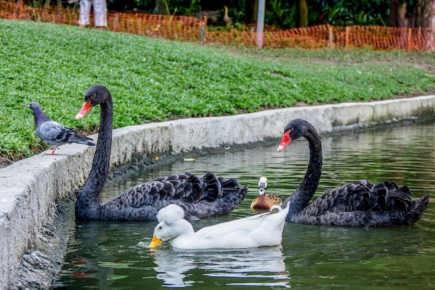 Brazylijskie ptaki na zewnątrz