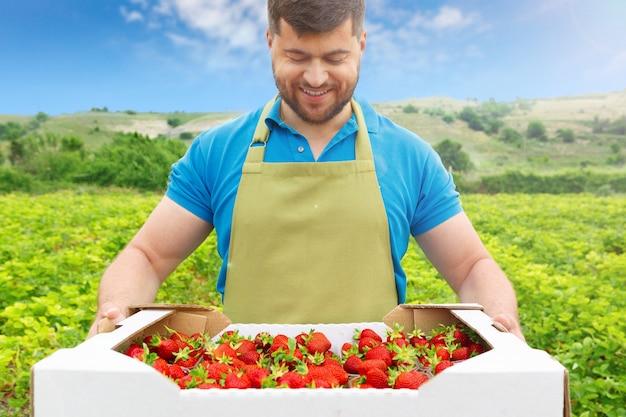 Brodaty mężczyzna w średnim wieku stojący w polu truskawek z pudełkiem świeżych truskawek