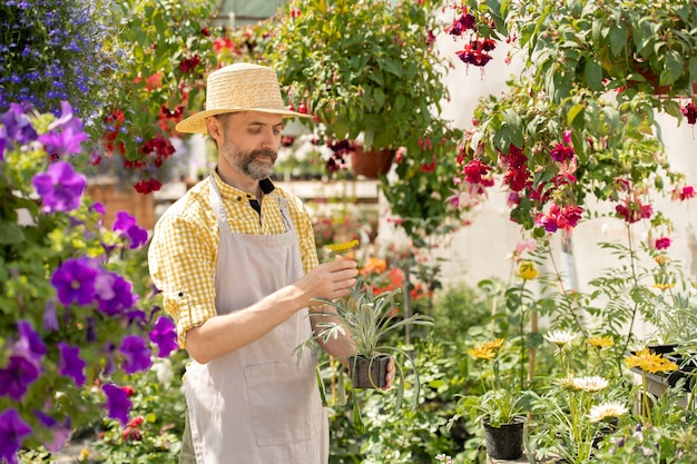 Brodaty rolnik w kapeluszu i fartuchu trzyma garnek z kwiatem ogrodowym, stojąc między kwietnikami w dzień roboczy