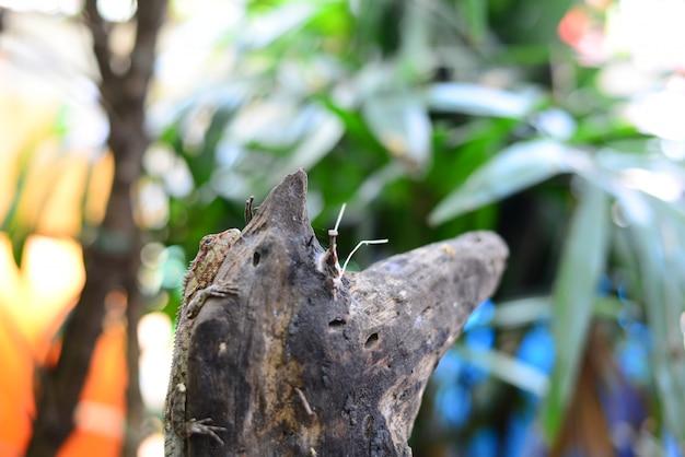 Brown kameleon odpoczywa na drewnianej beli