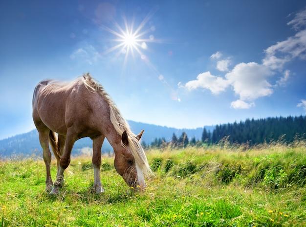 Brown koń z lekką grzywą na zielonym paśniku w górach