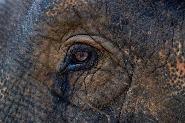 Brown małego słonia oka zakończenie up