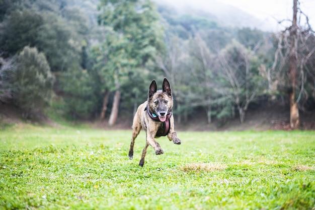 Brown psa bieg kłamać bawić się w naturze