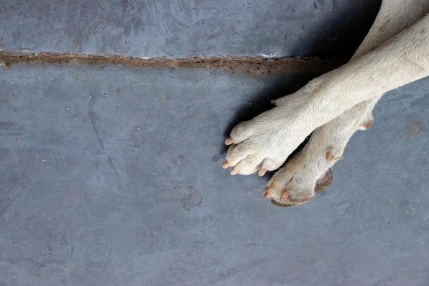 Brudna biała stopa bezpańskiego psa na metalowej podłodze