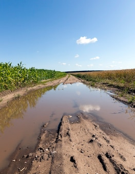 Brudna popękana droga z głębokimi koleinami przejeżdżających samochodów, na środku drogi powstała po deszczach kałuża, letni krajobraz na polach uprawnych