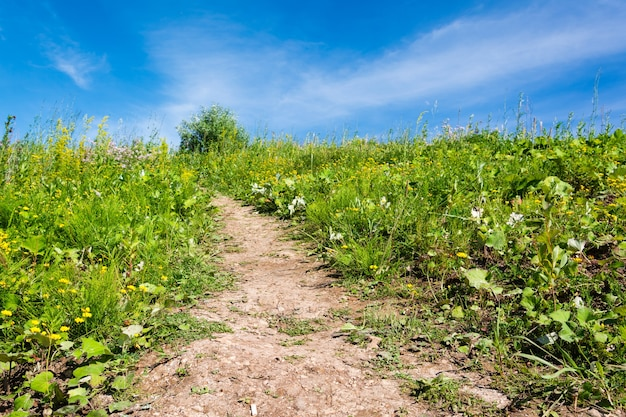 Brudna ścieżka otoczona zieloną trawą wznosząca się do błękitnego nieba