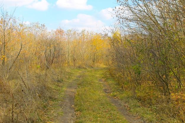 Brudna wiejska droga w lesie jesienią