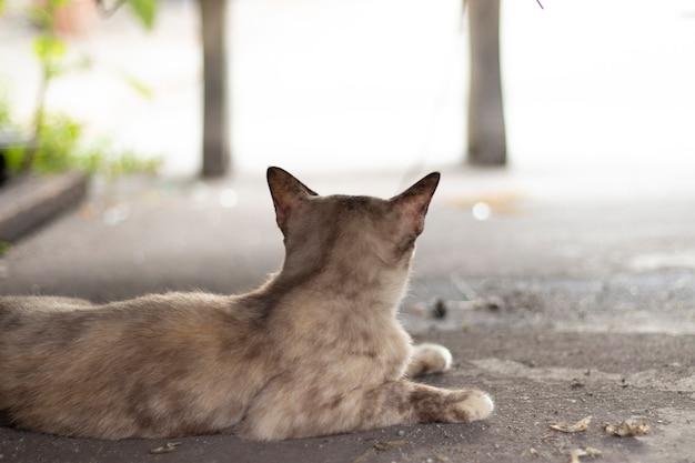 Brudne bezdomne koty na ulicach, samotny bezdomny kot, widok kota z tyłu
