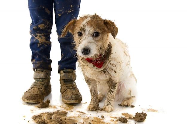 Brudny pies i dziecko. po odtwarzaczu w puddle mudu.