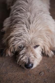 Brudny pies na ulicy