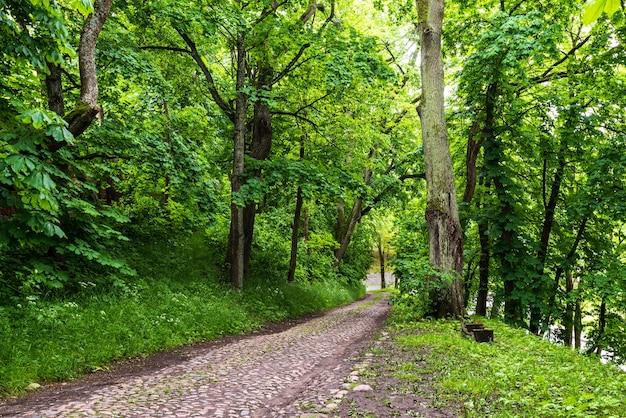 Brukowana droga między drzewami w lesie