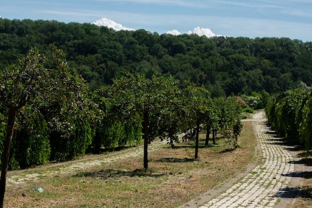 Brukowany chodnik we włoskim ogrodzie w parku