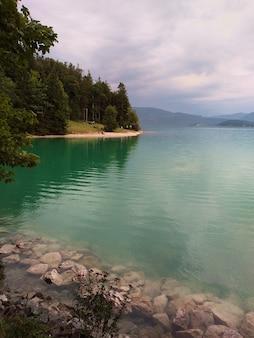Brzeg jeziora w lesie