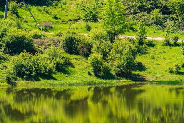 Brzeg jeziora z zieloną trawą