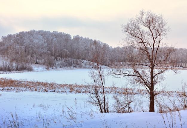 Brzeg jeziora zimą nagie drzewa w śniegu pole lód na wodnych wzgórzach