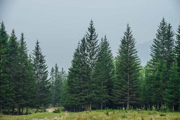 Brzeg lasu iglastego i skały.