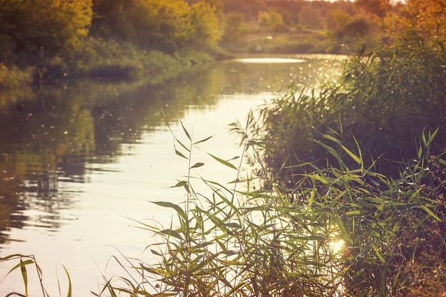 Brzeg rzeki w słoneczny letni dzień