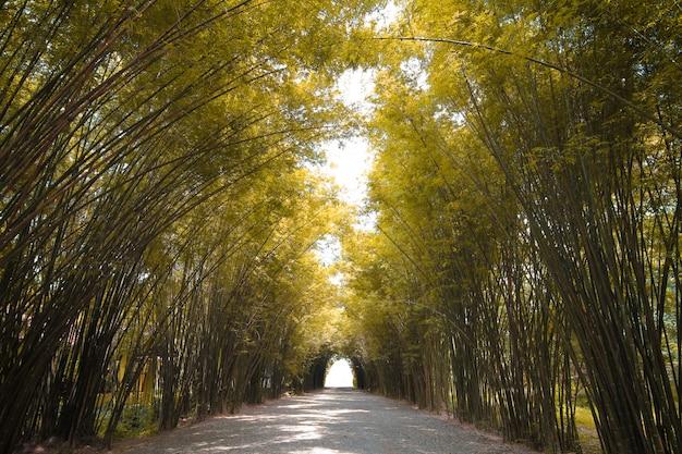 Brzmienie jesieni bambusowy las w tajlandii