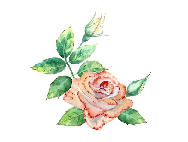 Brzoskwiniowe róże, zielone liście, otwarte i zamknięte kwiaty. bukiet kwiatów na kartki okolicznościowe lub zaproszenia. akwarela ilustracja.
