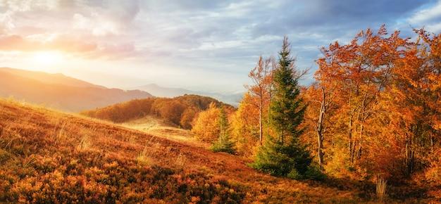 Brzozowy las w słonecznym popołudniu podczas gdy jesień sezon