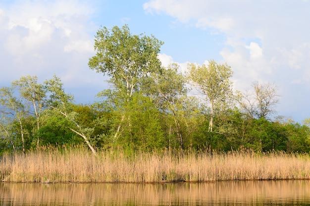 Brzozy i trzciny w pobliżu jeziora