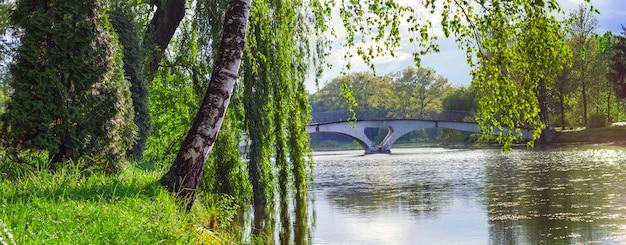 Brzozy i wierzby pochylają się nad jeziorem, a za nim mały mostek