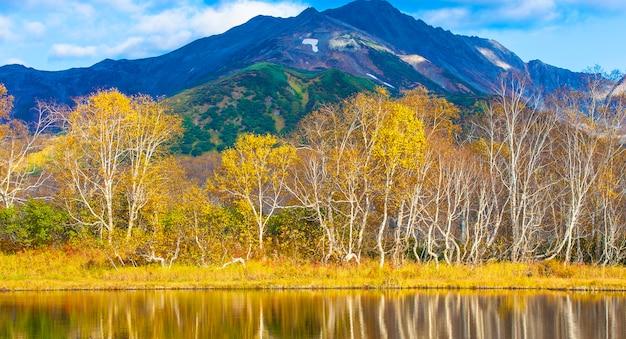 Brzozy w jesieni odbija w jeziorze