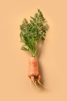 Brzydka świeża marchewka na beżowej koncepcji organiczne naturalne warzywa