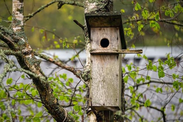 Budka lęgowa ptaków na drzewie w pochmurny dzień.