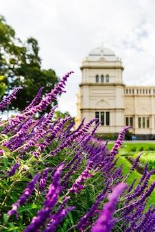 Budynek wystawy królewskiej i lawenda w melbourne w australii