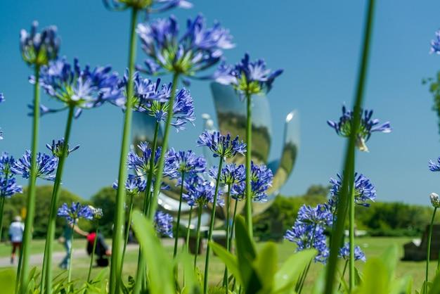 Buenos aires argentyna floralis generica znany również jako metalowy kwiat