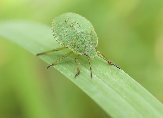 Bug na zielonym liściu