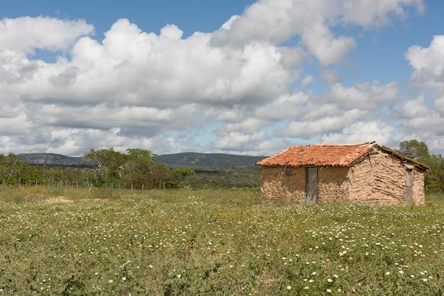 Buique, pernambuco, brazylia - 17 czerwca 2016: dom z gliny w polach kwiatowych w vale do catimbau