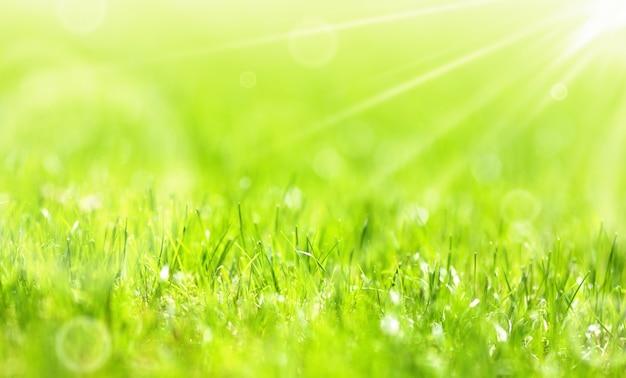 Bujna letnia zielona trawa