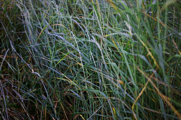 Bujna zielona trawa usiana kroplami deszczu
