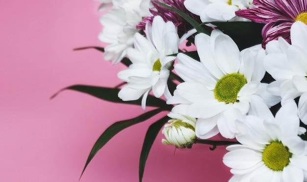 Bukiet białych chryzantem na różowym tle delikatna świąteczna kompozycja kwiatowa