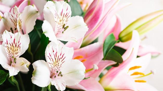 Bukiet białych kwiatów alstromeria i różowe lilie z bliska na białym tle. kwiecisty wiosny tło z bezpłatną przestrzenią dla teksta, kopii przestrzeń. kompozycja z pięknymi kwitnącymi kwiatami.