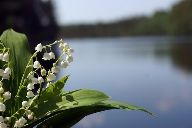 Bukiet białych kwiatów konwalii z zielonymi liśćmi na tle błękitnego jeziora.