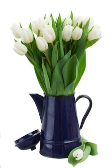 Bukiet białych tulipanów w niebieskim garnku na białym tle