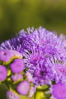 Bukiet cudownych fioletowych kwiatów