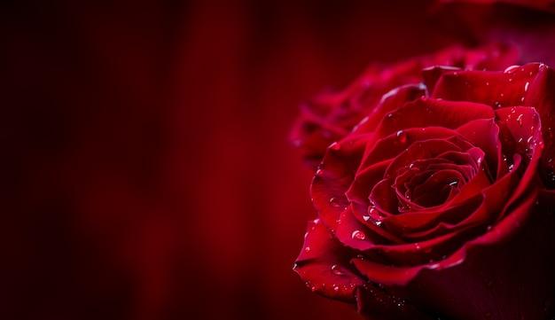 Bukiet czerwonych róż przed czerwonym tle valentine.
