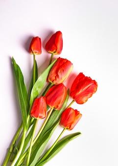 Bukiet czerwonych tulipanów na białym tle