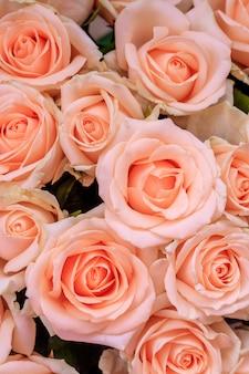 Bukiet delikatnych róż. tło róż kwiatowy. piękne kwiaty. prezent na święta. świeże kwiaty.