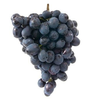 Bukiet dojrzałych czerwonych winogron na białym tle