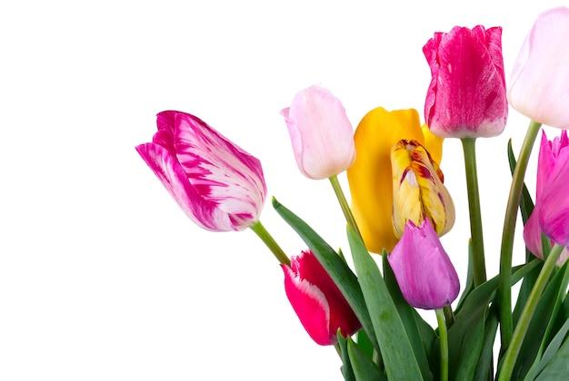 Bukiet kolorowych tulipanów na białym tle na białej przestrzeni. wiosenny bukiet.