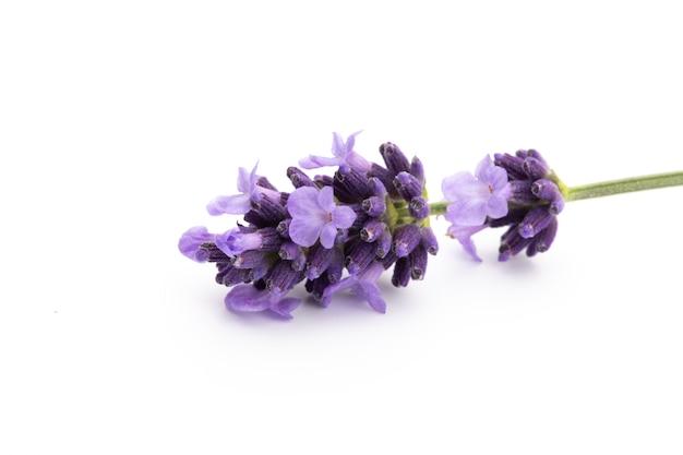 Bukiet kwiatów lawendy wiązanej na białym tle.