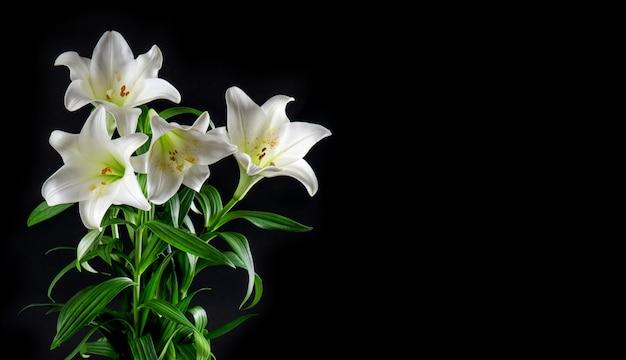 Bukiet kwiatów lilii czarne tło białe kwiaty